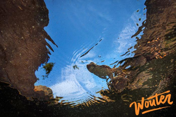 wouter-kingma-for-wwf-wadi-wurraya-national-park-fujeirah-04