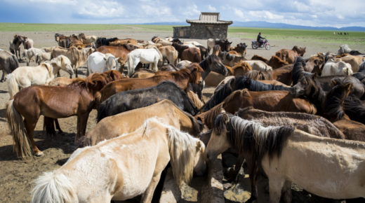 Mongolia – Treading on Bones